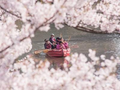 Eボート桜クルーズお申込み受付中です♪
